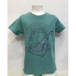 green whale (2).jpg